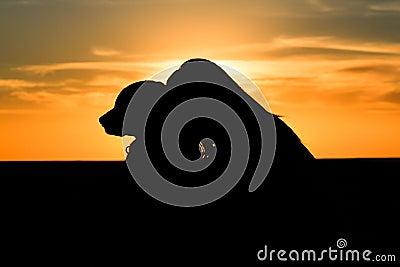 Woman dog silhouette