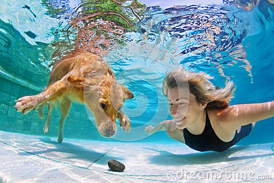 Woman with dog swimming underwater stock photo image How to train your dog to swim in the pool