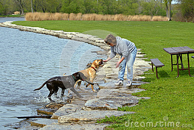 Woman and dogs at park