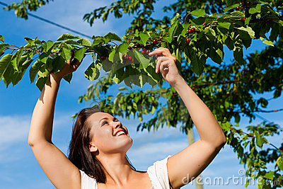 Woman eating cherries in summer