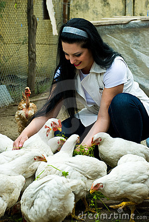Free Woman Feeding Big Chicken Farm Stock Images - 14239124