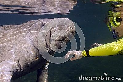 Woman greets manatee