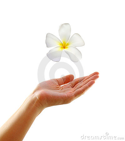 Woman hand with frangipani