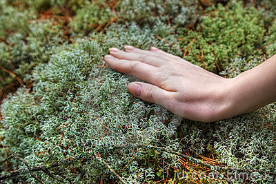 Woman hand touching moss