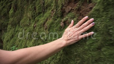 Woman hand touching softly the moss on the wall in the tropical rainforest. Woman hand touching softly the moss on the wall in the tropical rainforest stock footage