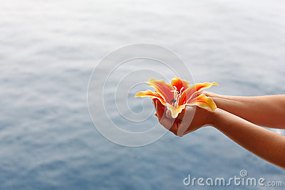 Woman hands hold lily at background of water