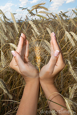 Woman hands holding corns