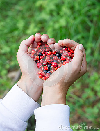 Free Woman Hands Holding Handful Ripe Fresh Forest Berries In Heart Shape. Blueberry And Wild Strawberry In Human Palm. Stock Photos - 96668483