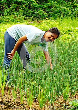 Woman harvest green onion