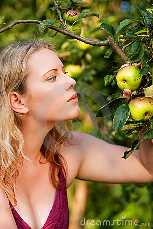 Woman Harvesting apples in garden