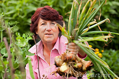 Woman harvesting onions in garden