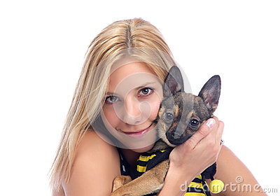 Woman hold in hands small Chihuahua dog