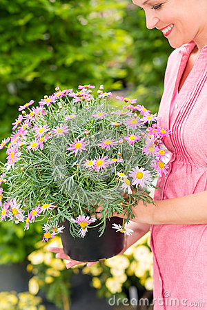 Woman hold potted daisy flower garden centre