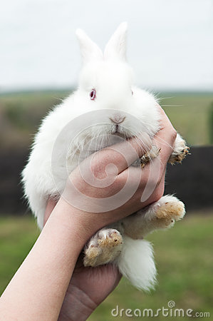 Woman hold white rabbit