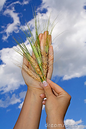Woman holding crops to the sky