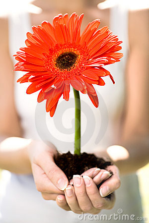 Woman holding flower in dirt