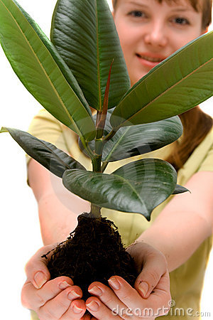 Woman is holding small tree in the hands