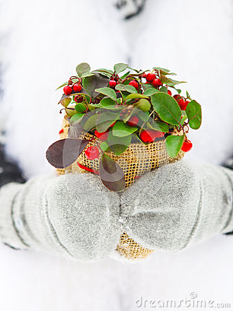 Woman holding winter plant in her hands