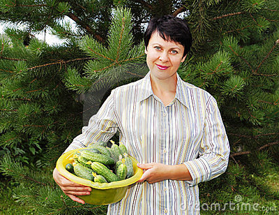 Woman holds fresh cucumbers