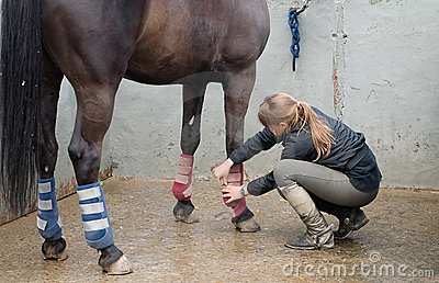 Woman with horse doing a massage in its legs
