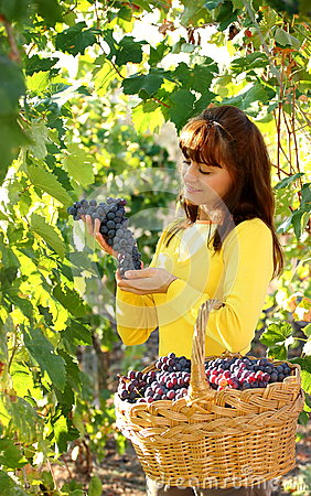 Free Woman In Vineyard Royalty Free Stock Photography - 26784287