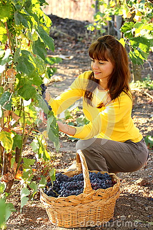 Free Woman In Vineyard Stock Images - 26784324