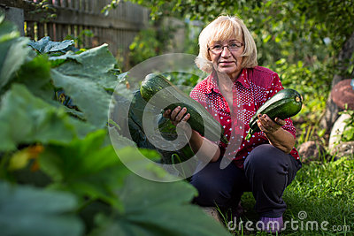 Woman with a large zucchini holding in the hands stock for Big hands for gardening