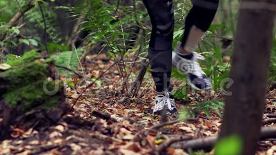 Woman makes his way in autumn forest stock video