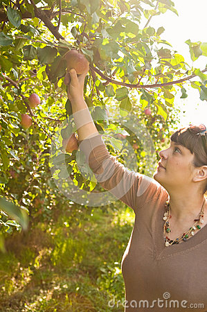 Woman Picking An Apple From A Tree