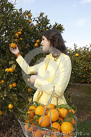 Free Woman Picking Oranges Stock Photo - 24877210