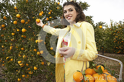 Woman Picking Oranges