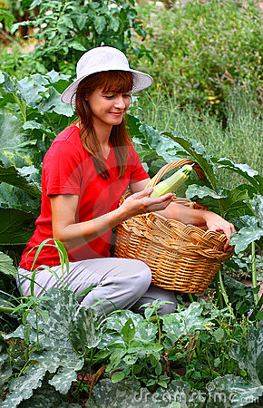 Woman picking zucchini