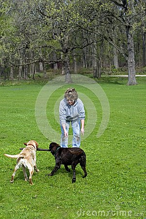 Woman playing with dogs