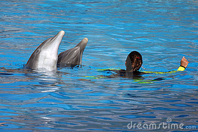 Woman playing with dolphins