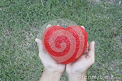 Woman s hands holding heart over grass