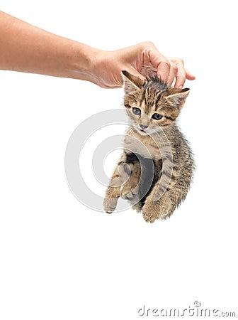 Woman seized kitten