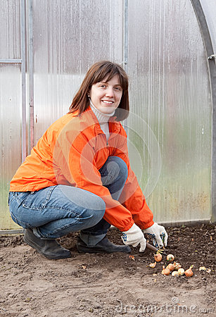 Woman sets onion in soil