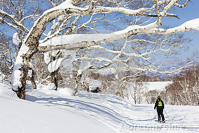 Woman Skis Past Snow Covered Trees