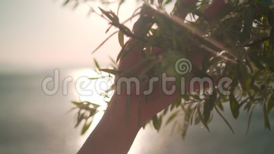 Woman sliding hand of green foliage in slow motion  Female hand touching  the surface of bright bushes in the sunset sun  Lifestyle, feel