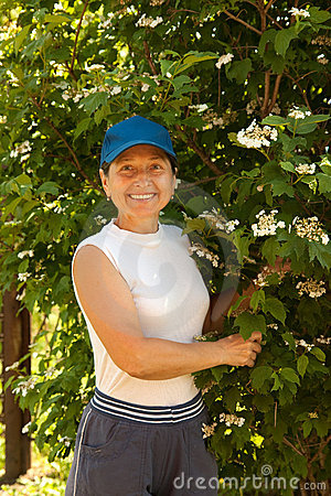 Woman with    snowball tree