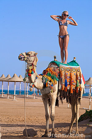 Free Woman Standing On A Camel On A Ocean Background Stock Photos - 5134023