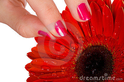Woman tear of petal from red gerbera