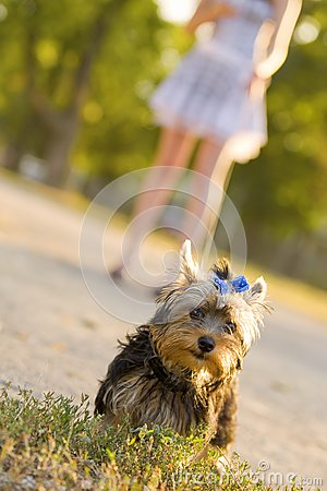 Woman with tiny terrier