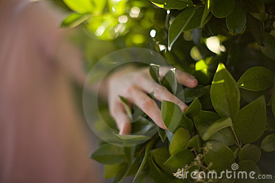 Woman touching plant