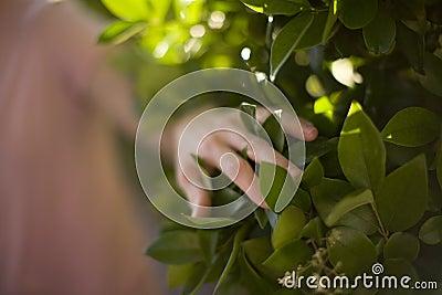 Woman touching plant
