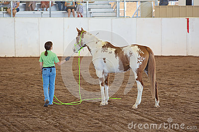 Woman Training Her Horse