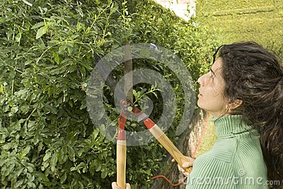 Woman Trimming Shrub - Horizontal