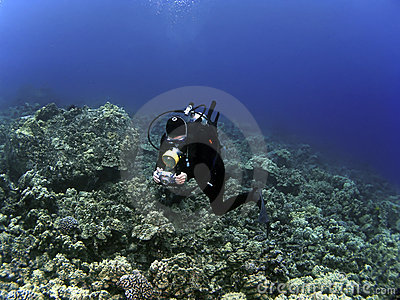 Woman Underwater Photographer Scuba Diving