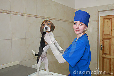 Woman veterinarian and small dog.