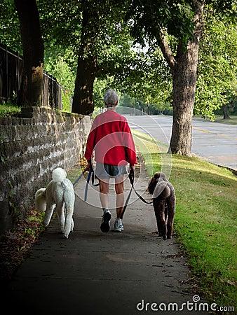Woman walking poodles.